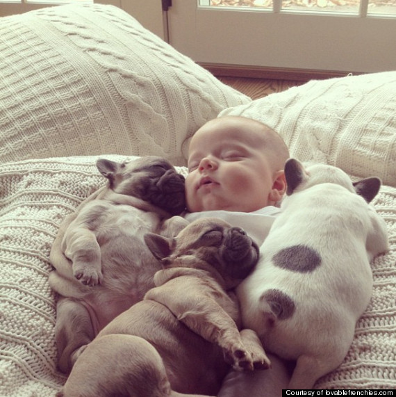 baby with dogs